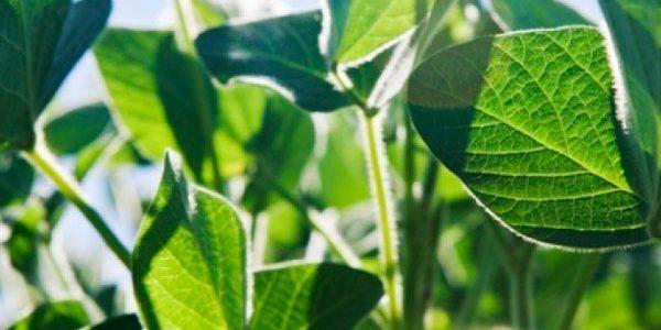 ¿Qué son los Fertilizantes Foliares?