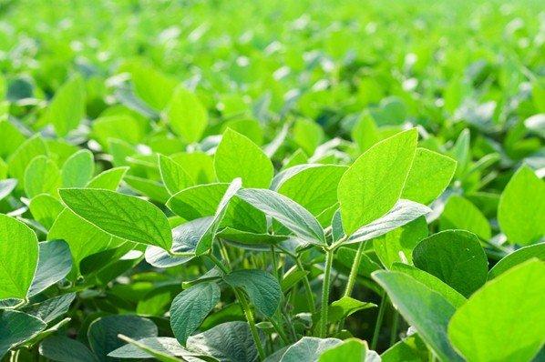 La Importancia del Fertilizante Foliar Para las Plantas